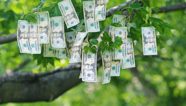 co-op dollars growing on a tree